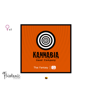 kannabia, thai fantasy feminisees, graines de cannabis a collectionner, biotanic seeds, graines de collection france